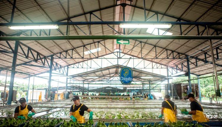 Η Chiquita γιόρτασε την Παγκόσμια Ημέρα Νερού
